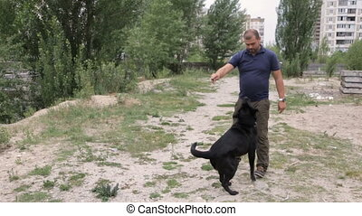 A man is training his dog - A man teaches a dog to execute...
