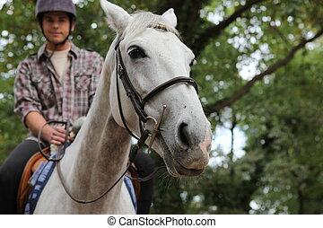 A man on a horse.