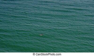 A man on an air mattress swims far into the sea.