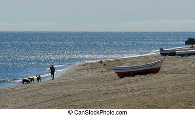 A man playing with dogs near the sea. Fishing Boats on the Shore at Gibraltar, Spain.