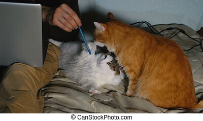 A man plays with a pen with your cat sitting on the bed with his laptop, the cats distract from the work.