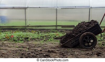 A man pours a garden cart with manure to fertilize the soil in the garden, country cottage area, dung