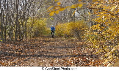 A man riding in the park on a bicycle. Yellow autumn.