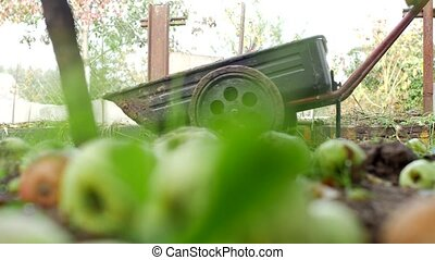 A man rolls a garden cart at the dacha for loading manure, country cottage area