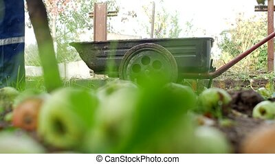 A man rolls a garden cart at the dacha for loading manure