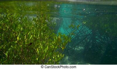A man swimming near mangroves