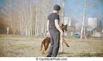 A man training his german shepherd dog - incite the dog on the grip bait and making the dog jump. Mid shot