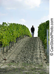 a man walking in the vines