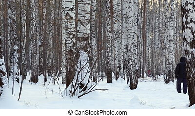 A man walking with his dog thru birch grove