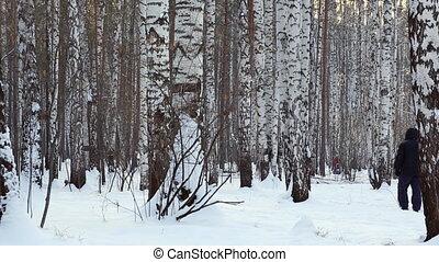 A man walking with his dog thru birch grove