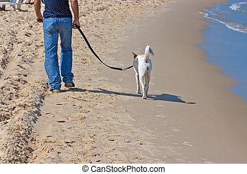 beach - A man walks along the beach with a dog on a leash