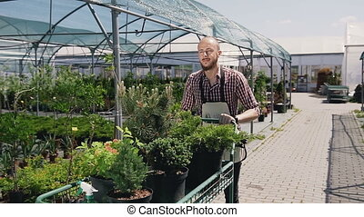A man with a beard goes through a greenhouse, and carries on the Garden trolley seedlings of beautiful decorative trees.