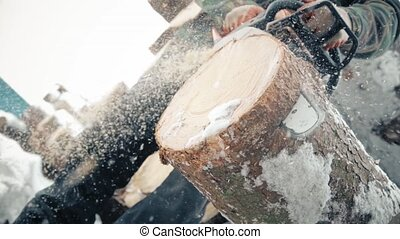 A man with a chainsaw sawing a pine tree