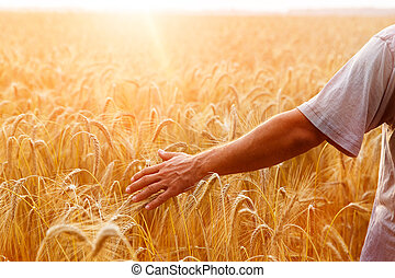 A man with his back to the viewer in a field of wheat...
