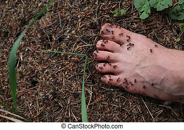 a man's foot on an anthill - a man's foot, ants crawl on...