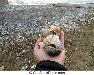 A man's hand holds a handful of stones