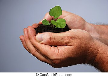 a mans hand planting - a male hand holds earth with a little...