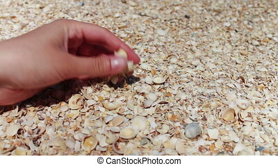 A man's hand takes seashells on the beach.