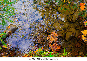 A maple leaf lies in a forest on a river with a reflection of the sky.