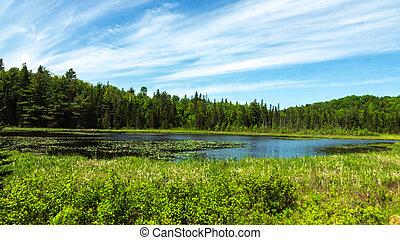A marsh on a sunny day