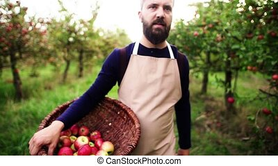 A mature man walking in orchard in autumn, carrying a basket...
