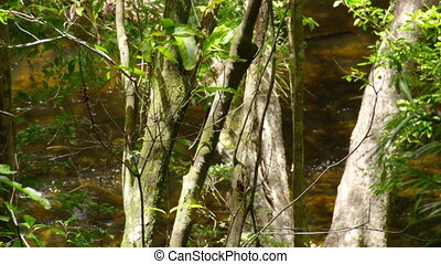 A medium shot of a jungle river. Panning to the left.