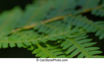 A medium shot of green leaves - A macro shot of group of...