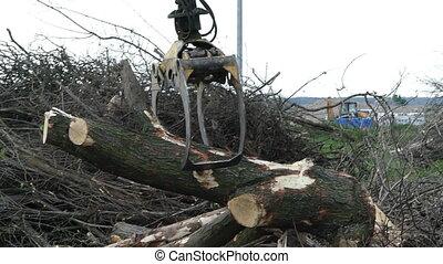 A metallic crane arm grabs logs on a river bank in slow motion