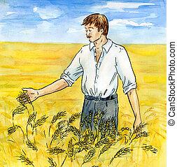 a, mezőgazdász, képben látható, egy, wheaten, mező