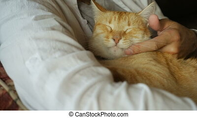 A middle aged man gently strokes his orange ginger cat in...