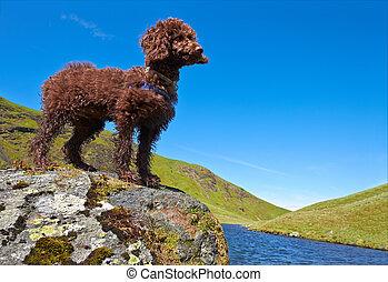 Miniature Poodle - A Miniature Poodle Standing beside a tarn...
