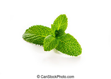 mint - a mint leafs isolated on white