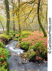 A misty Autumn morning at Golitha Falls on the edge of Bodmin Moor in Cornwall