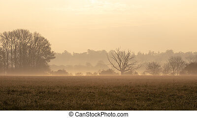A misty morning in rural england countryside with no people