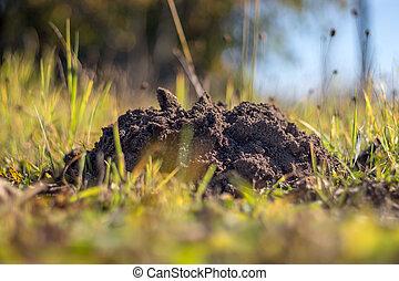 A molehill in the grass in the garden