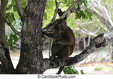 A monkey on the tree - Exotic animals, tropical...