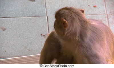 A monkey sitting on the floor of a building - An extreme...