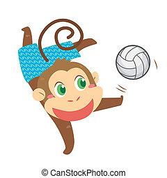 a monkey's beach activities