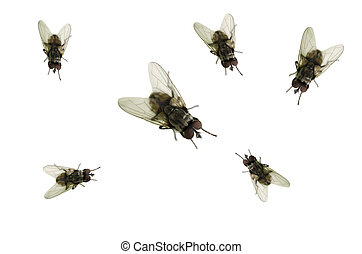 a, moscas