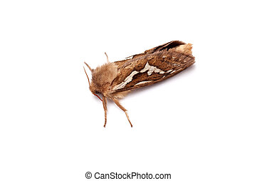 a moth - a little moth over a white background