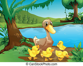 A mother duck with her ducklings