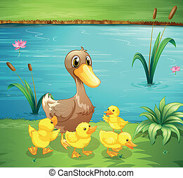A mother duck with her ducklings in the river - Illustration...