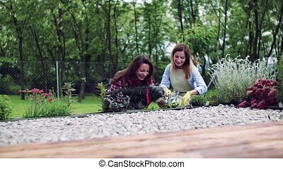 A mother with adult daughter gardening outdoors, planting ...