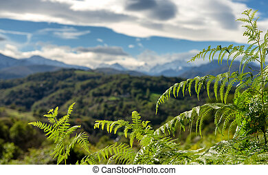 mountain landscape with ferns in the foreground