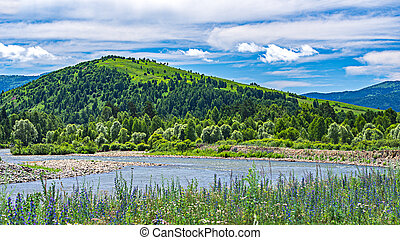 A mountain river at the foot of the hill with green trees, white clouds on blue sky and meadow flowers in foreground, Altai Mountains, Kazakhstan