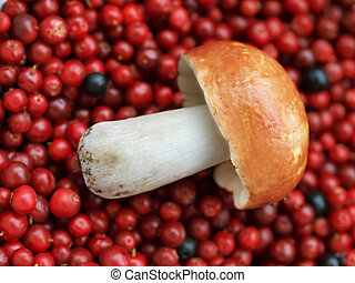 A mushroom and cranberries