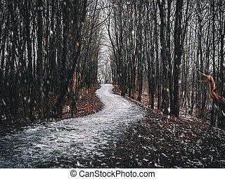 A mystical winding path through a dark spring forest.