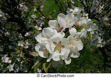 a nanking cherry and flowers