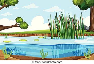 a, natur, sumpf, landschaftsbild