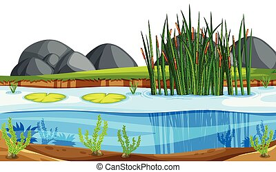 A nature pond landscape